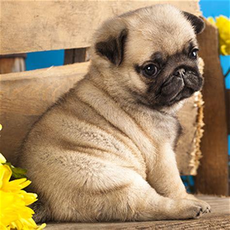 aspca puppy mills puppy mills aspca