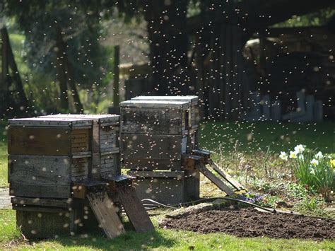 17 best images about bee hives in the garden on
