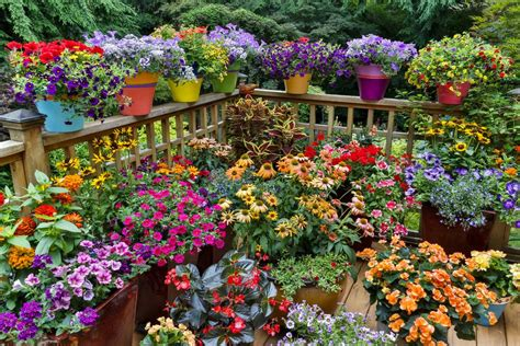 container gardens 12 ideas for flowering container gardens