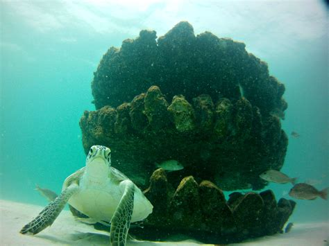 west marine orange park fl discover underwater wonders at navarre diving reefs