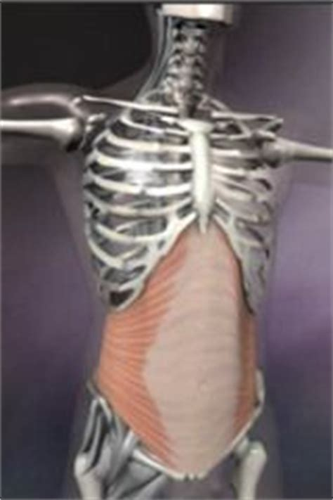 images  muscles   powerhouse  pinterest