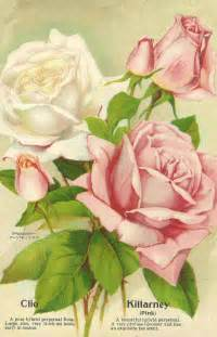 Free Flower Garden Catalogs Antique Images Free Flower Clip Pink And White Roses From Antique Seed Catalog