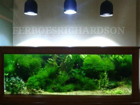 aquascape yang indah inspirasi aquascape indah dengan rerumputan java moss