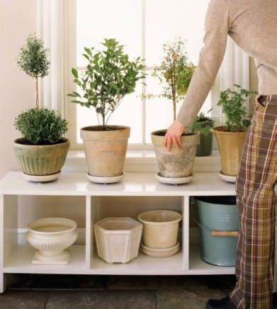 feng shui plants for office desk 1000 images about feng shui on pinterest