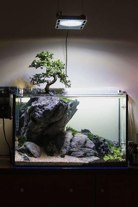 beleuchtung 60l aquarium πάνω από 25 κορυφαίες ιδέες για aquarium design στο