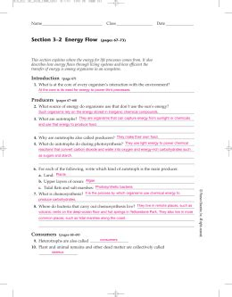 section 3 2 energy flow answers 3 2 energy flow w s