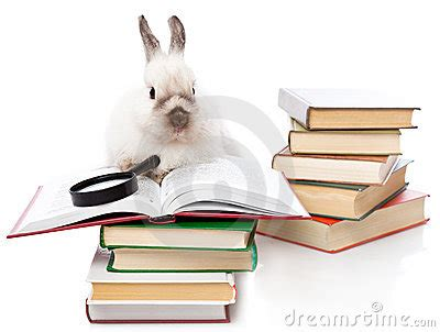 bunny s staycation s business trip books a rabbit is reading a book with a loupe stock images
