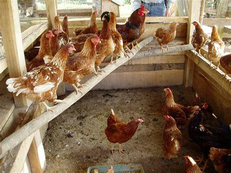 Jual Alas Kandang Ayam tipe kandang ayam ketekdekil