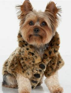 yorkie pet supplies clothes