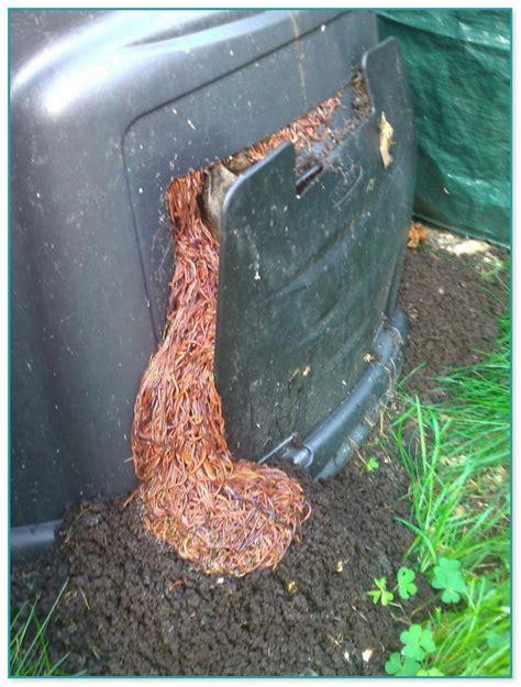 best compost worms best worm composting bin