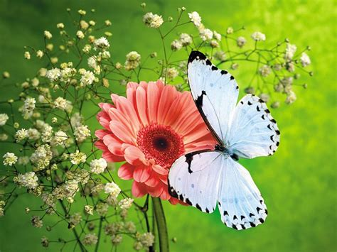 wallpaper flower and butterfly wallpapers butterfly desktop backgrounds