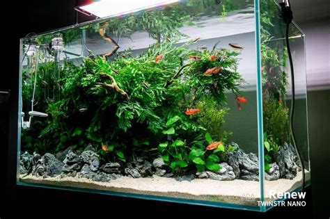 aquascape maintenance fresh low maintenance aquarium fish aquariums