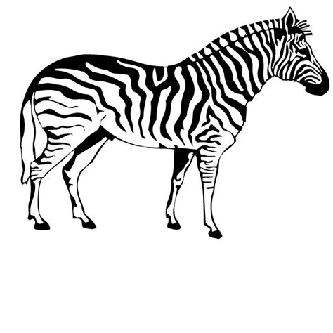 printable zebra pics zebra coloring pages free printable pictures coloring