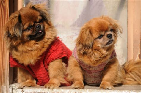 dog smell out of house how to get dog smell out of the house keeping your home free from that pekingese scent