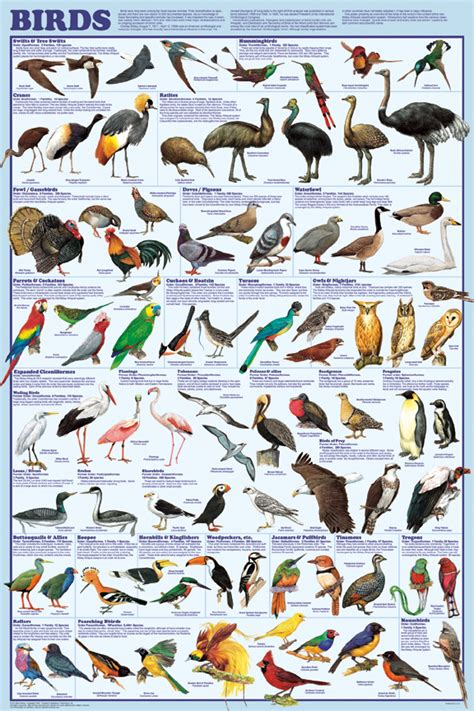 bird orders poster shows new bird classifcation system