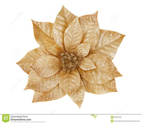 gold poinsettia stock photo image 28336440
