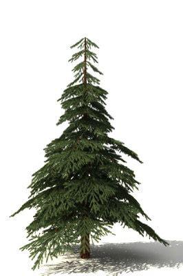 free tree model free fir tree 3d model