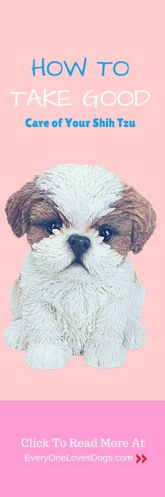 how to take care of a shih tzu puppy how to take care of your shih tzu