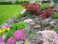 Steingartenpflanzen Winterhart
