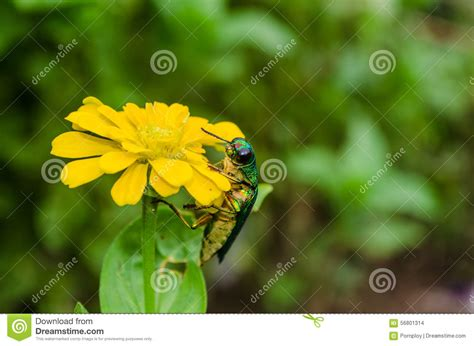 insects and flowers the insects and flowers stock photo image 56801314