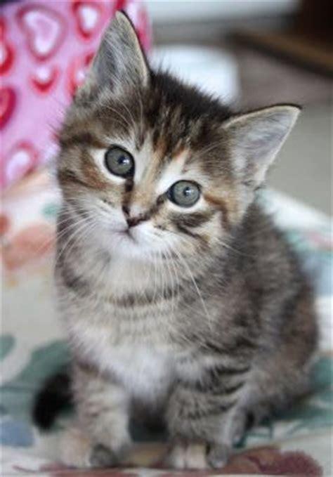 imagenes de gatitos blancas tiernas imagenes de gatos gatitos foto de gatito en tonos