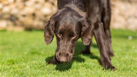 stuhl erbrechen schleimiger stuhl hund great bei andauerndem oder