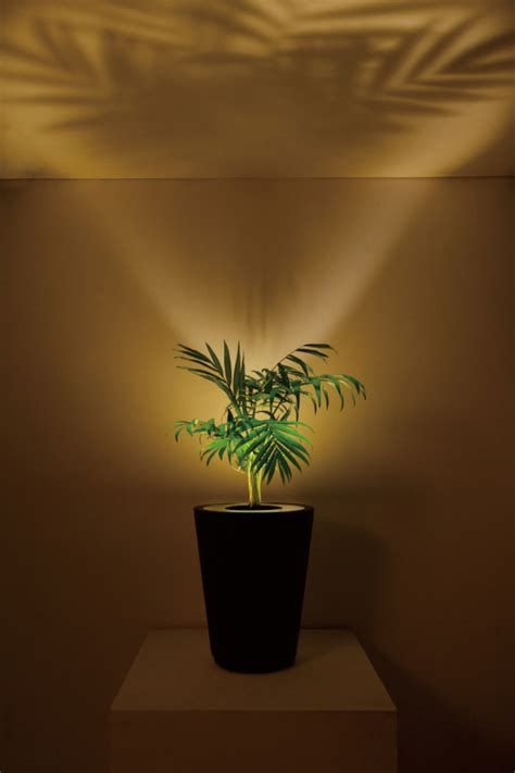 forestarium illuminated planter the green