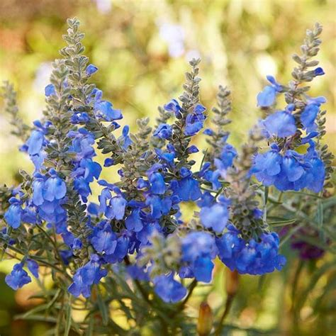best blue flowers for your garden