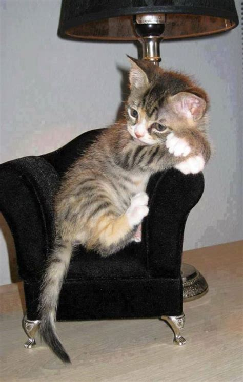 Cat On The Chair by Kitten On Chair Cute Cats And Kittens Pinterest