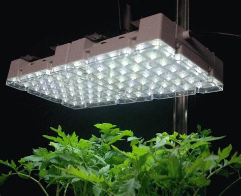 Indoor Growing Lights by Indoor Grow Lights Mouade Agafay