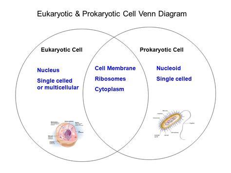 eukaryotic and prokaryotic venn diagram the cell investigation ppt