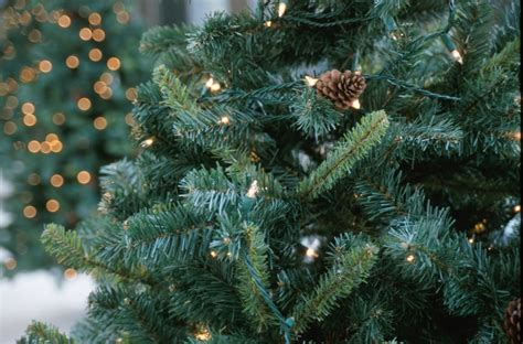 how to pick the perfect christmas tree and keep it alive