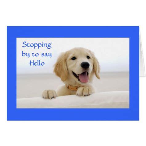 golden retriever puppy cards hello golden retriever puppy greeting card zazzle