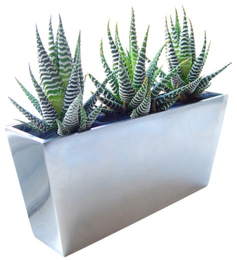 Planters Indoor Modern by Zebra Cactus Mirror Vase Modern Vases By Lushmodern