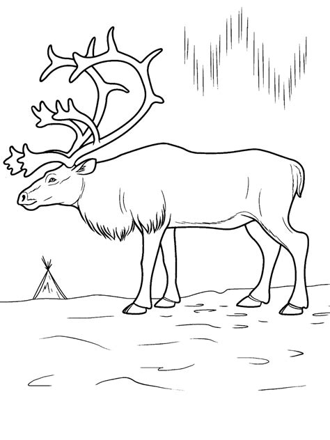 Free Coloring Pages Of Arctic Tundra Arctic Animals Coloring Pages