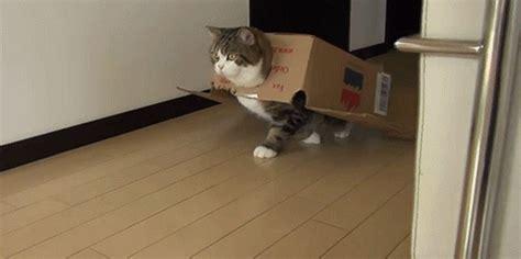 kitty wallpaper gif 箱こそ至福 猫の箱好きがわかるgifアニメーション カラパイア