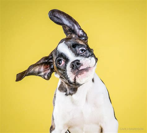 shaking puppy wacky high speed portraits of puppies mid shake by carli davidson colossal