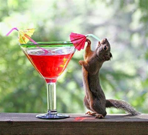 funny unusual squirrel drinking recipe interesting facts latest pictures funny  cute