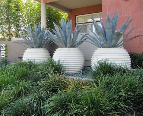 agave plants  pots google search  images