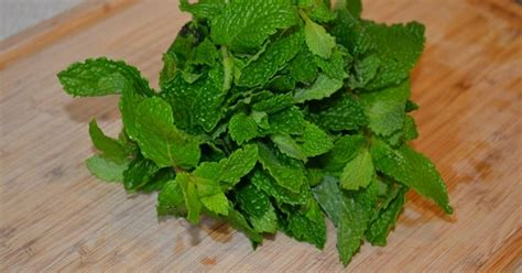 what can you give a for relief mint leaves can give you relief from cold and asthma healthytipsadvice healthy