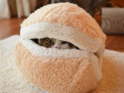 Cat Macaron Bed by Macaron Cat Bed And Maru Will Melt Your