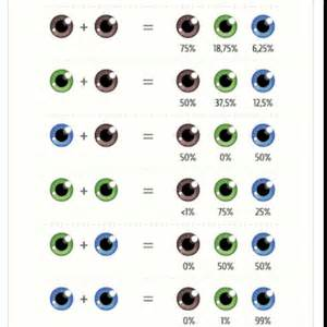 eye color chances eye color interesting july 2015 babies forums