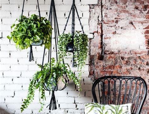 hang planten bloemen buiten home garden het beste voor binnen buiten