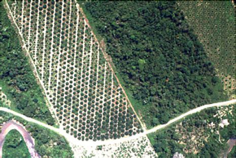 Fcmc Search Forest Carbon Markets And Communities Fcmc