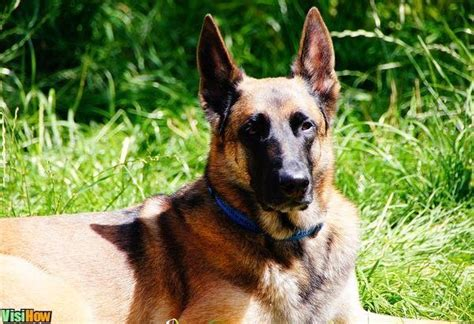 how to choose a breed find your breed visihow
