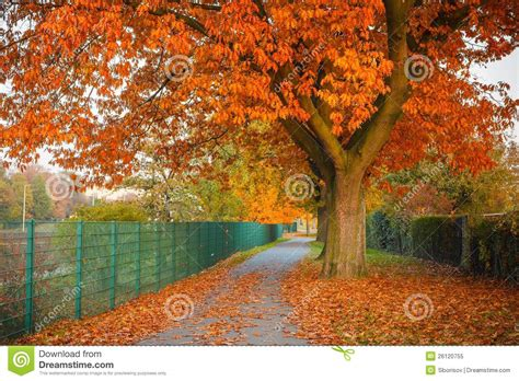autumn oak trees autumn posters picture