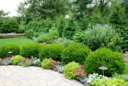 best shrubs bushes landscaping designs ideas pictur
