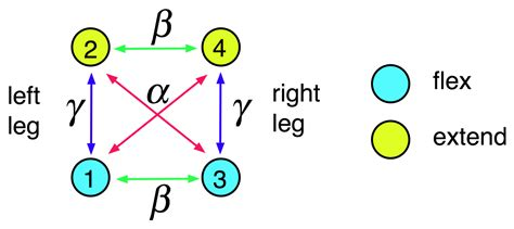 central pattern generator nature review symmetry free full text symmetry breaking in a rate