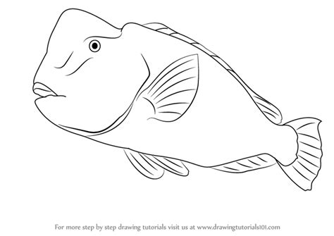 coloring pages of parrot fish learn how to draw a humphead parrotfish farm animals