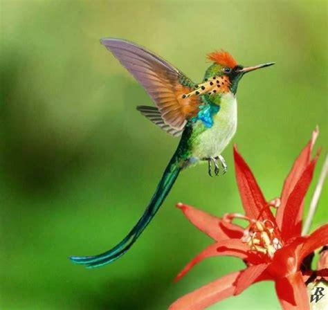 colors of hummingbirds best 20 hummingbird colors ideas on